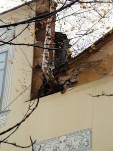 """bouleau traversant le mur à St-Petersbourg auteur """"Kuplidya"""""""