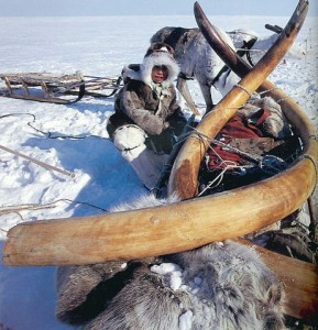 les défenses de mammouth, Yakoutie