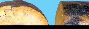 ivoire de mammouth
